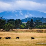 Tours-for-Two-Yarra-Valley-Tourism